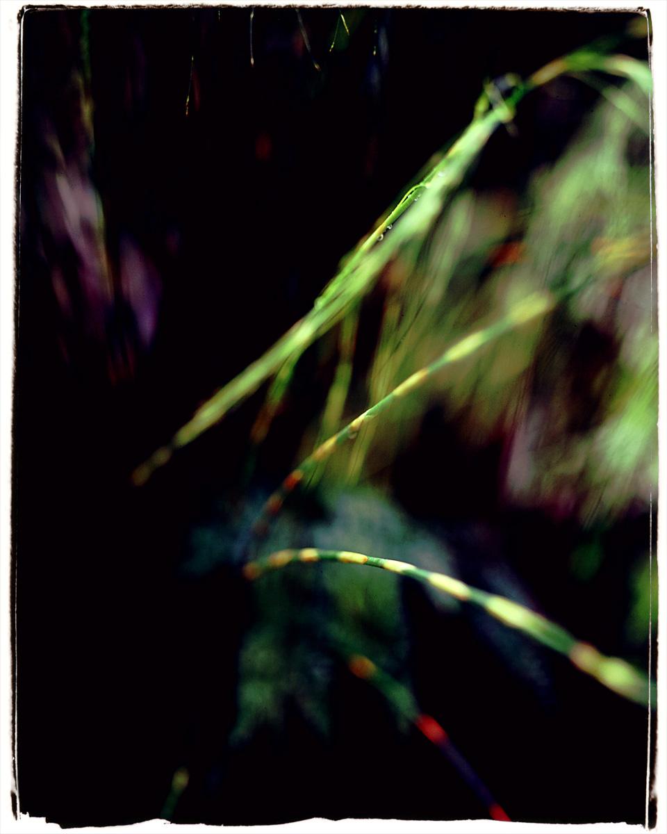 butterfly-006-2